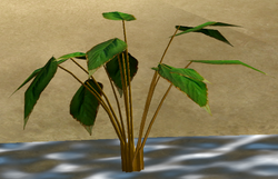 Herbs Ginseng Root.png